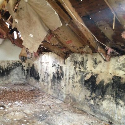 Mold Remediation - Tulsa Restoration Services